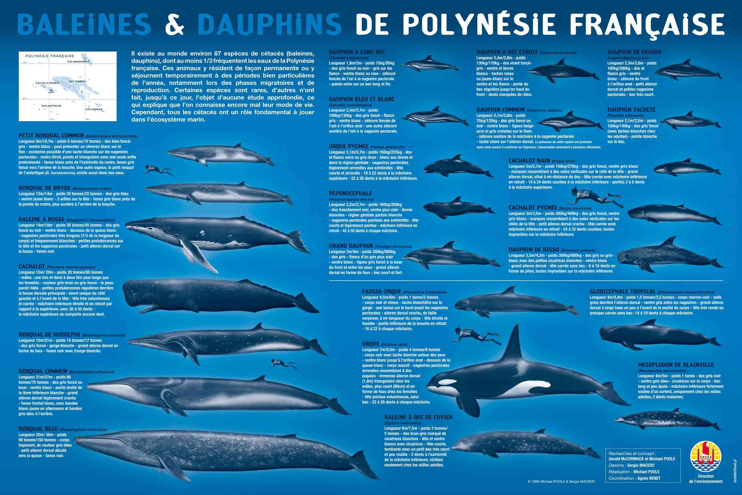 cetaces de polynesie
