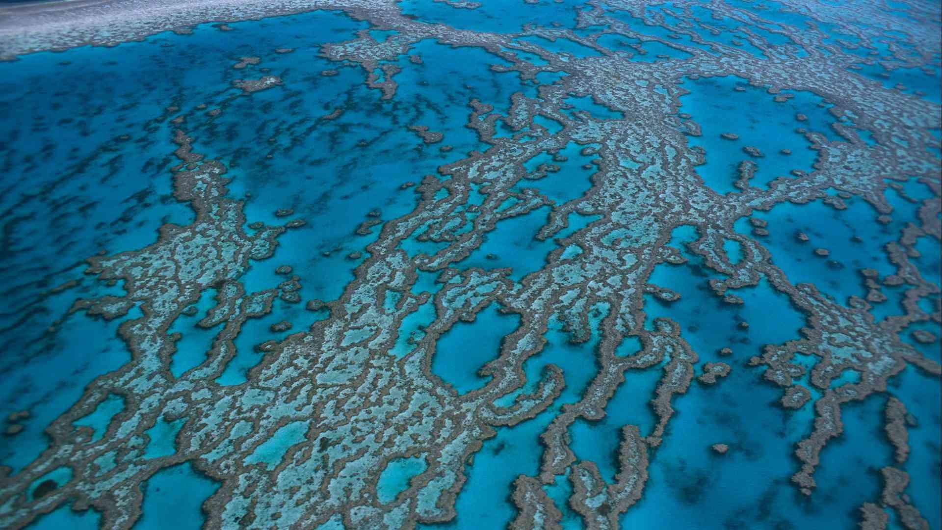 decouverte de la grande barriere de corail australienne