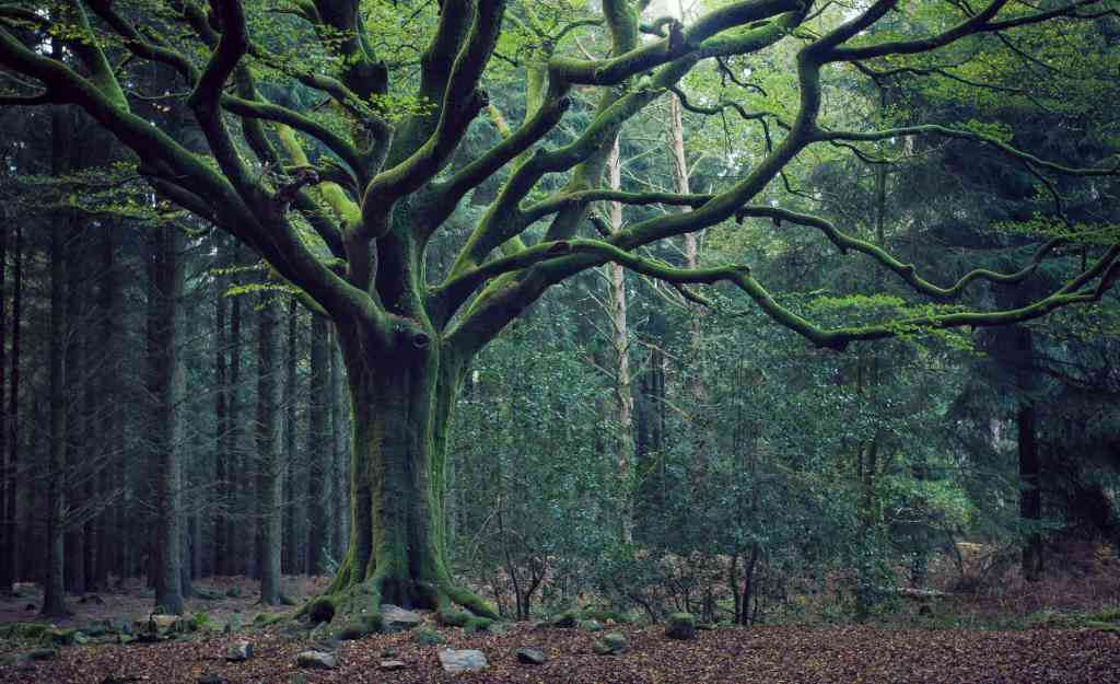 foret de broceliande