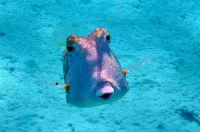 les poissons de polynesie