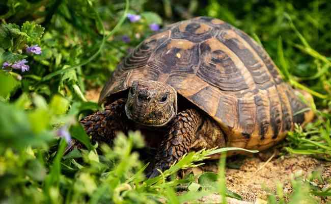 les tortues