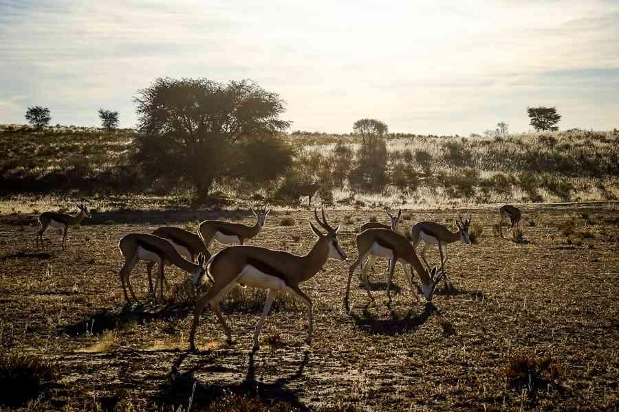 parc du kalahari