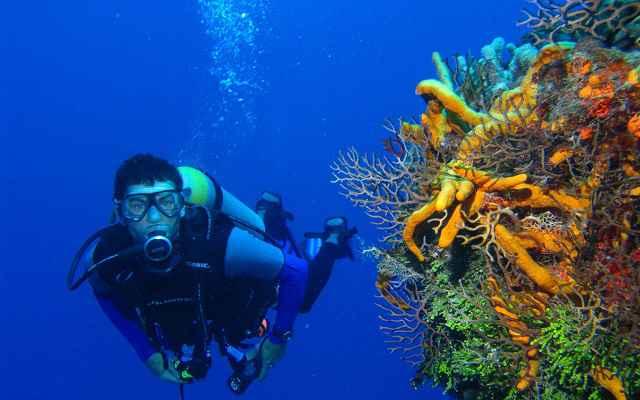 plongee aux antilles
