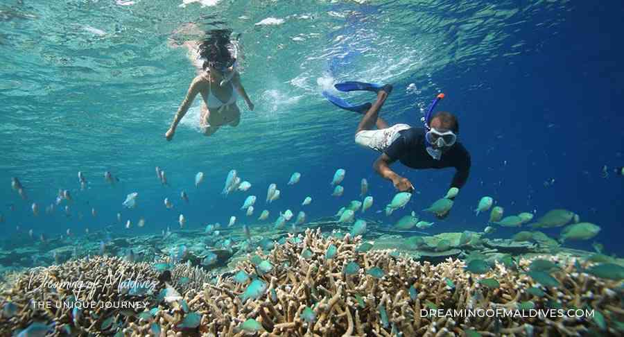 plongee aux maldives