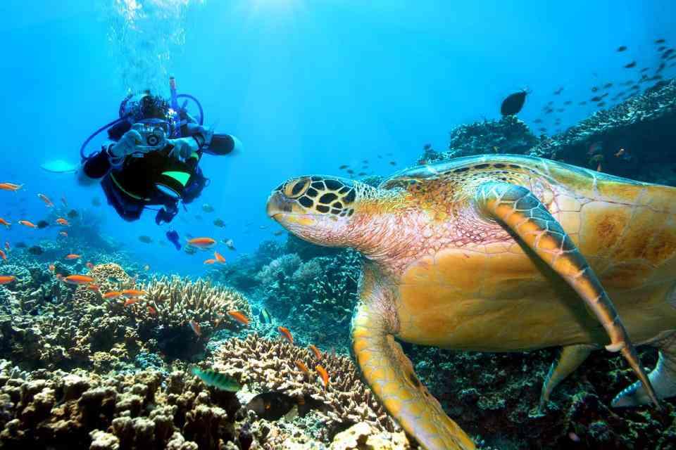 plongee aux seychelles
