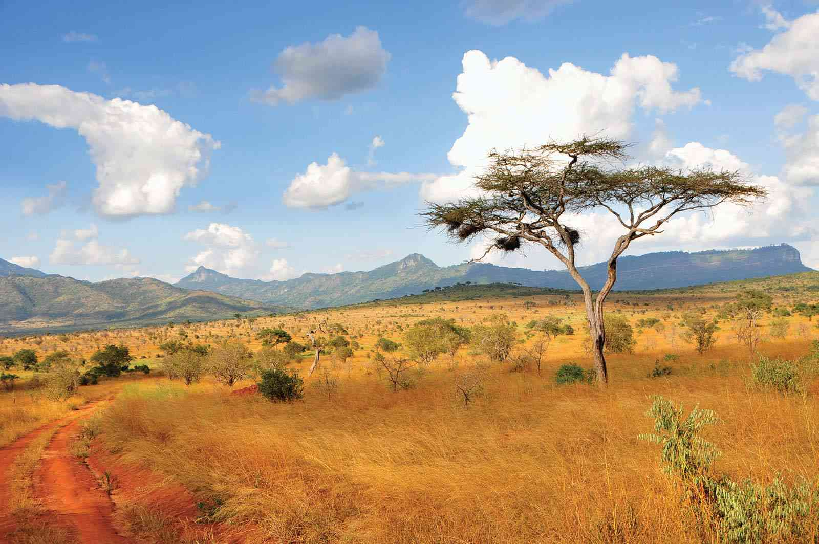 sejour safari et plongee au kenya