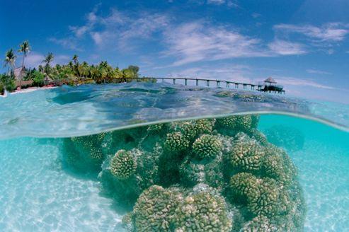 Les coraux polynesiens