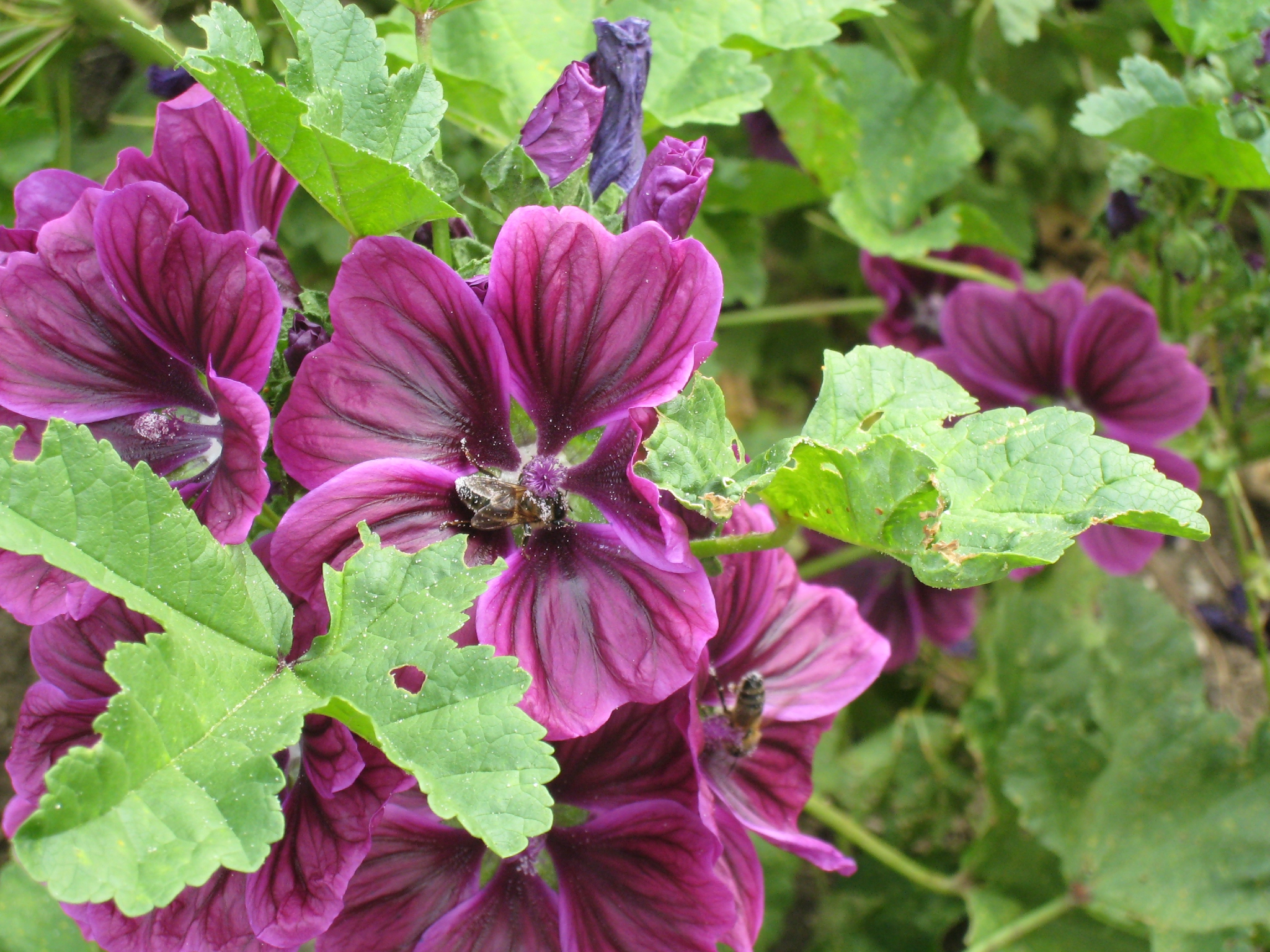 Les plantes vacances arts guides voyages for Tous les plantes