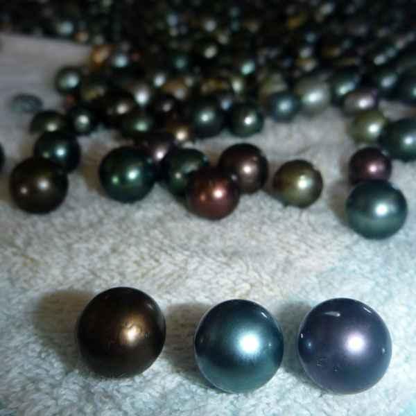 perle noire de polynesie