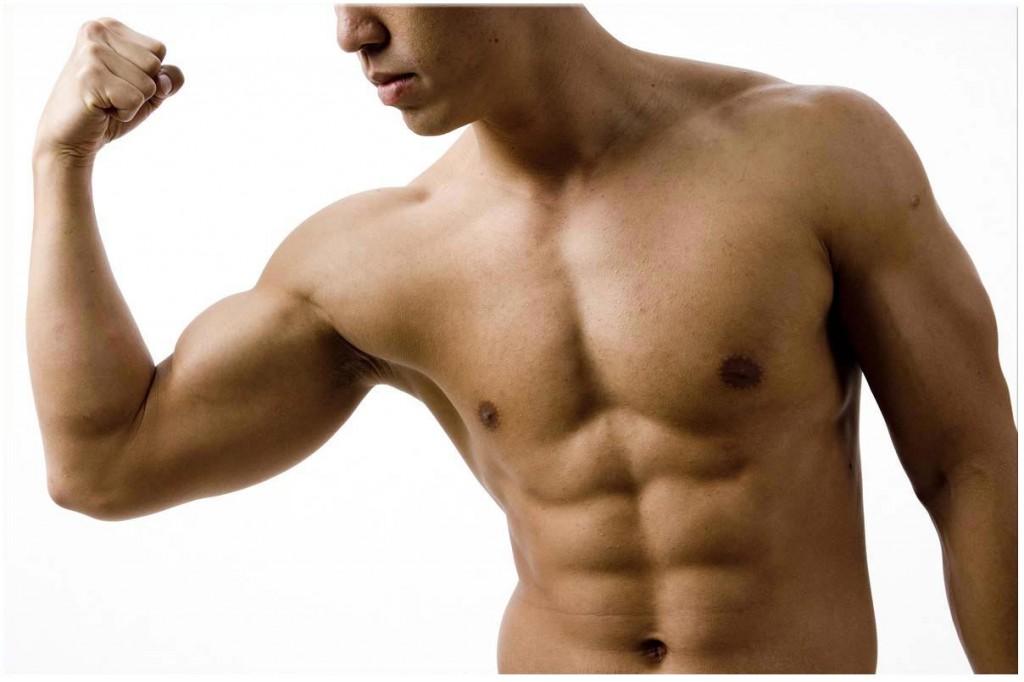 Abdos et Muscles