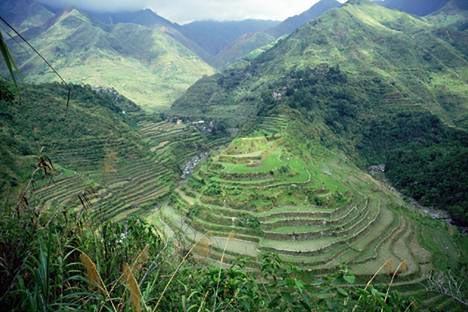 riziculture aux philippines