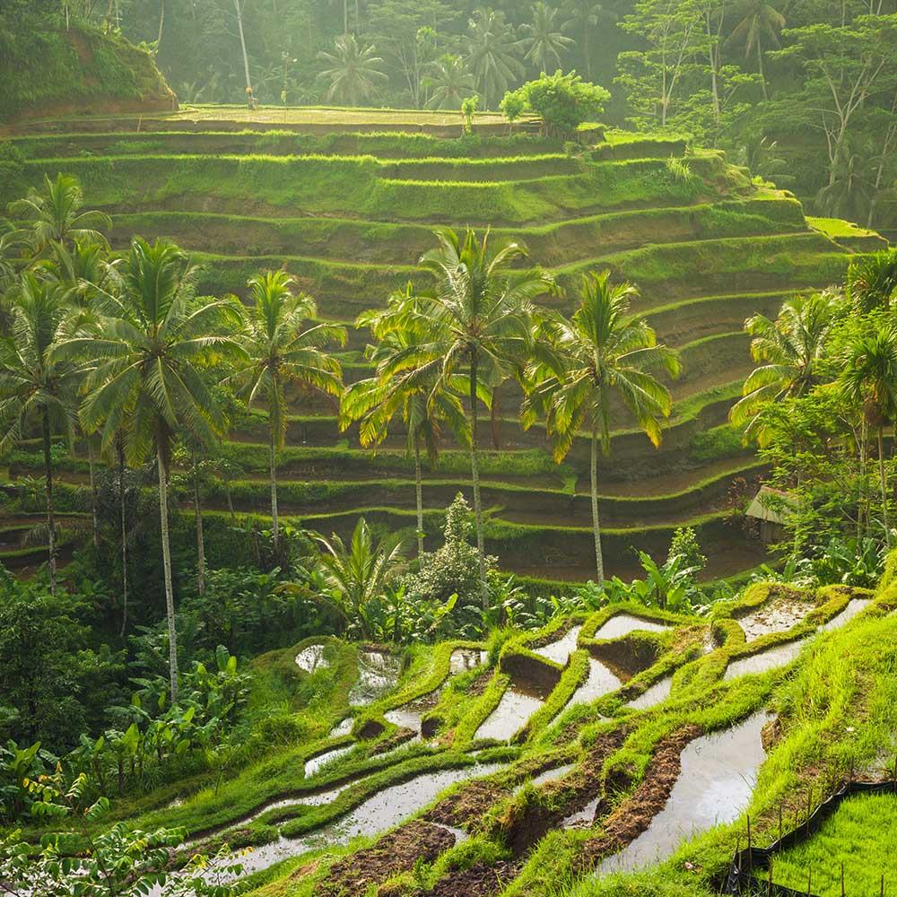 Indonésie-Circuit