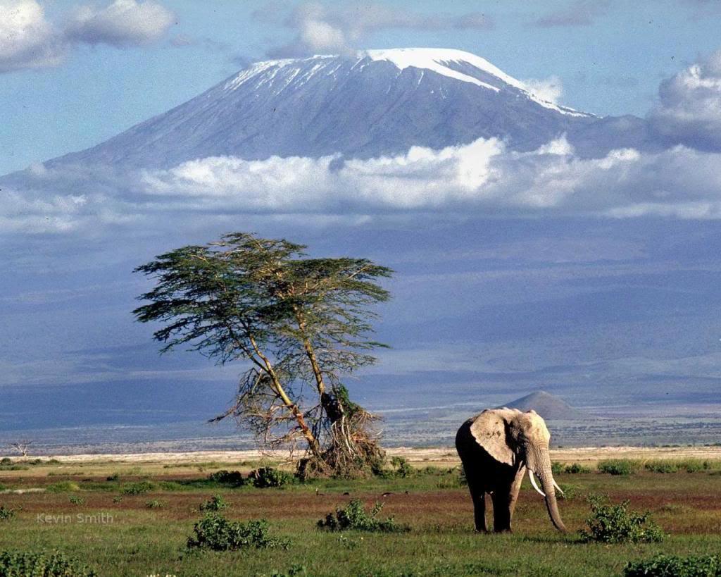 Tanzanie – kilimanjaro