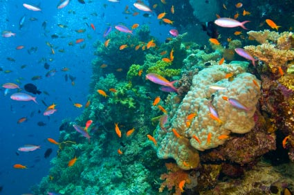 Plongée sous marine en Australie
