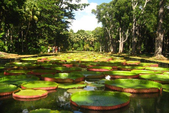 Mauritius - Maurice- Pamplemousses