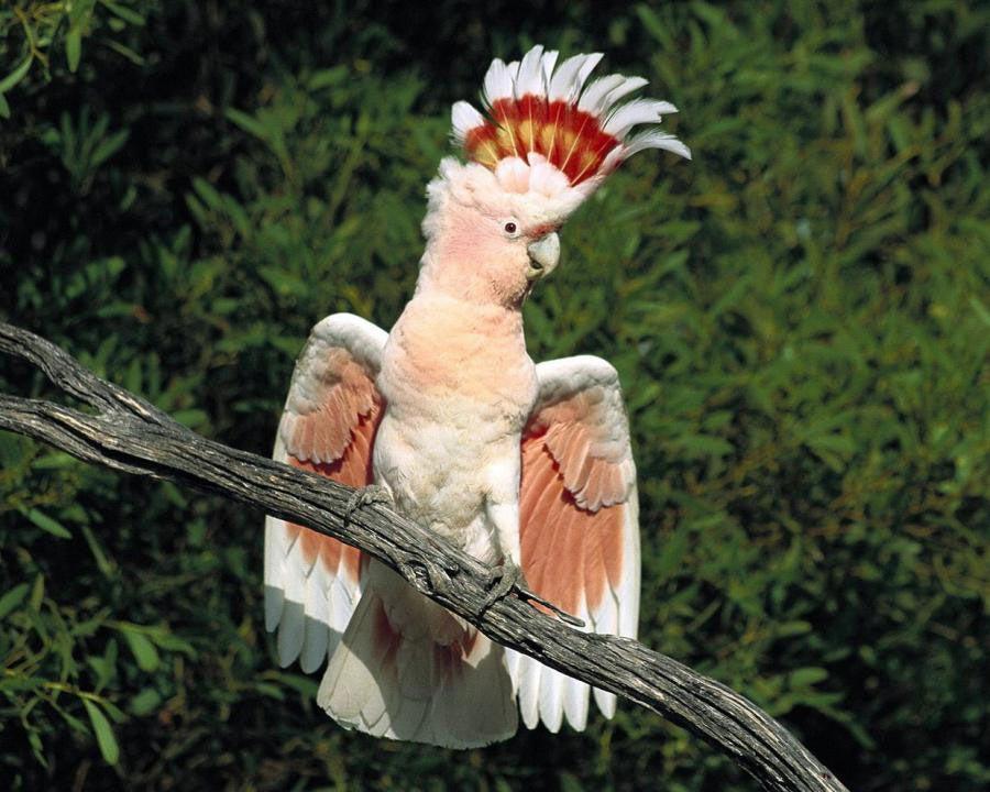 Oiseau de la réserve naturelle de Kakadu