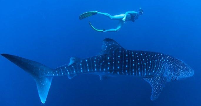 Plongée au Maldives