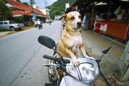 La Thailande en moto