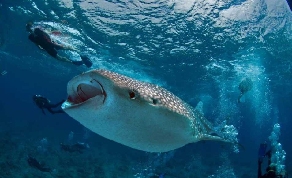 Maldives - Plongée