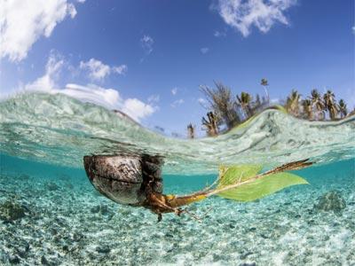 Iles Australes - Photo