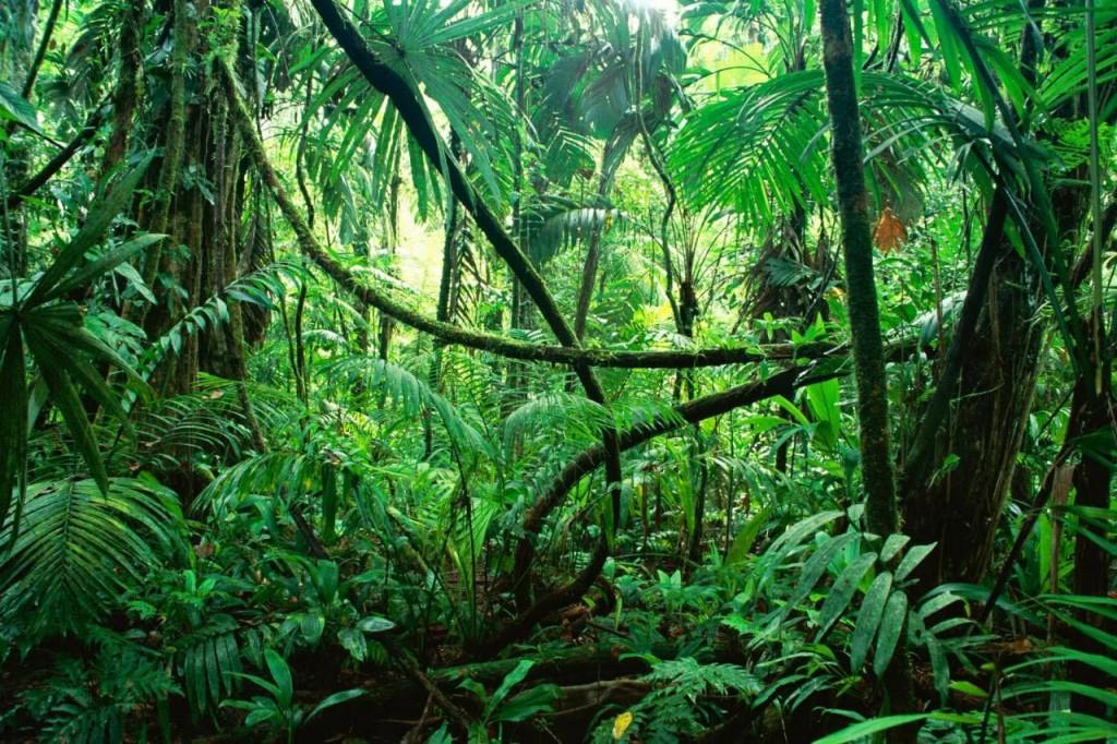 Jungle - Paysage de Guyane