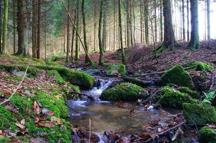 Forêt des Ardennes belges