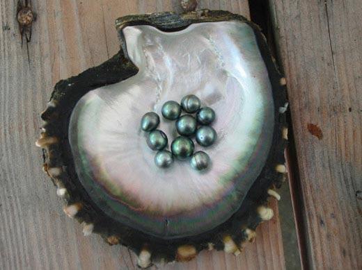 Perle de nacre - Tahiti Polynésie