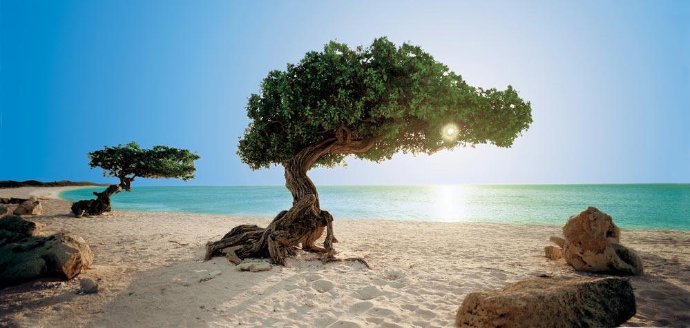 Paysage de Aruba - Plage