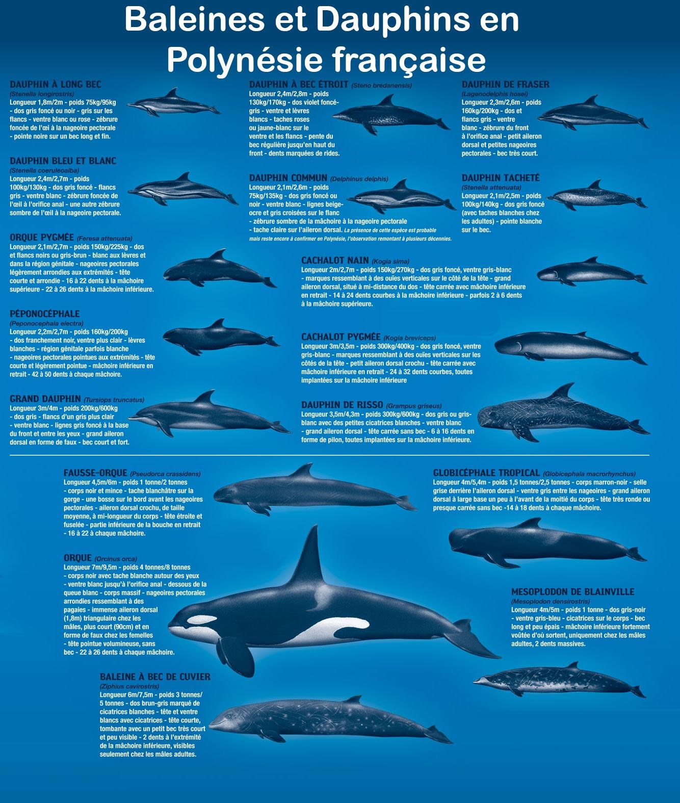 les cetaces de polynesie