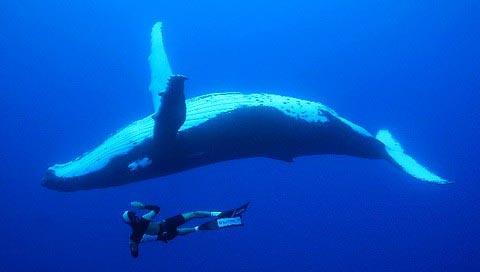 Rurutu - Baleines