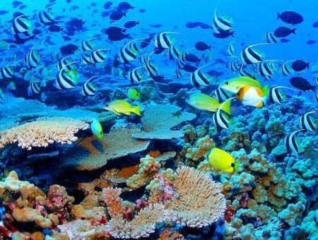 Corail - Récif en Polynésie