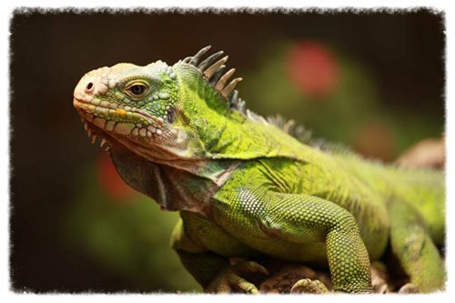 faune des Antilles