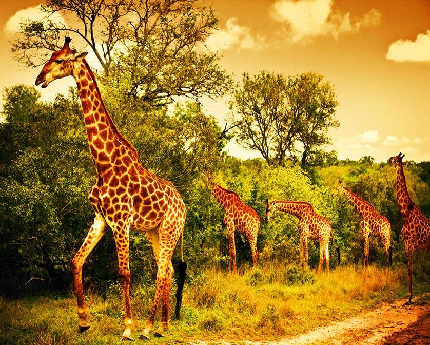 Afrique paysage