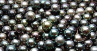 Perle noire de Tahiti - Polynésie