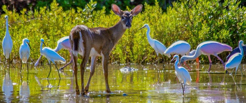 National-Key-Deer-Refuge