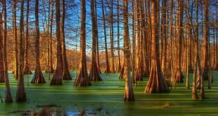 Paysage de Louisiane