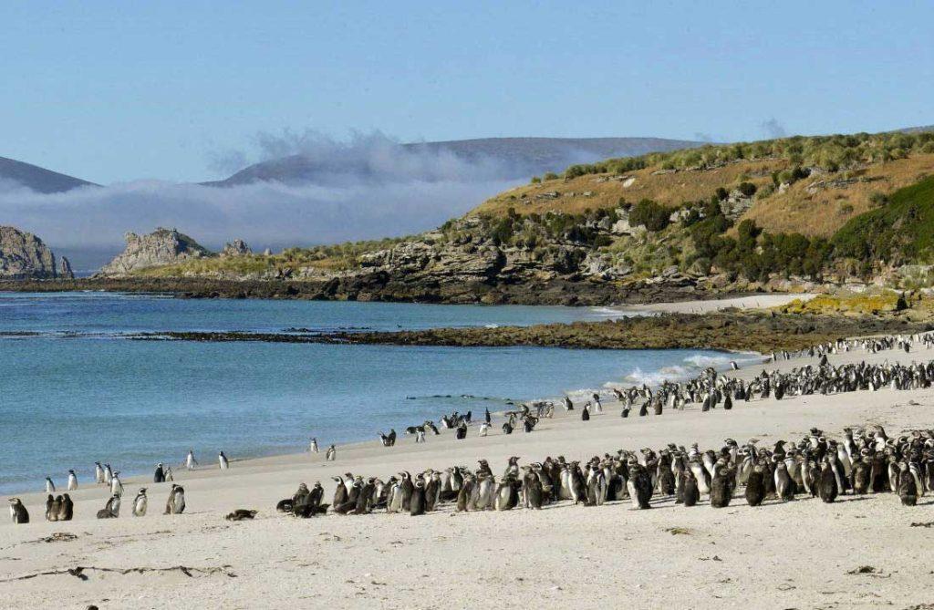 Falkland - une île des Malouines