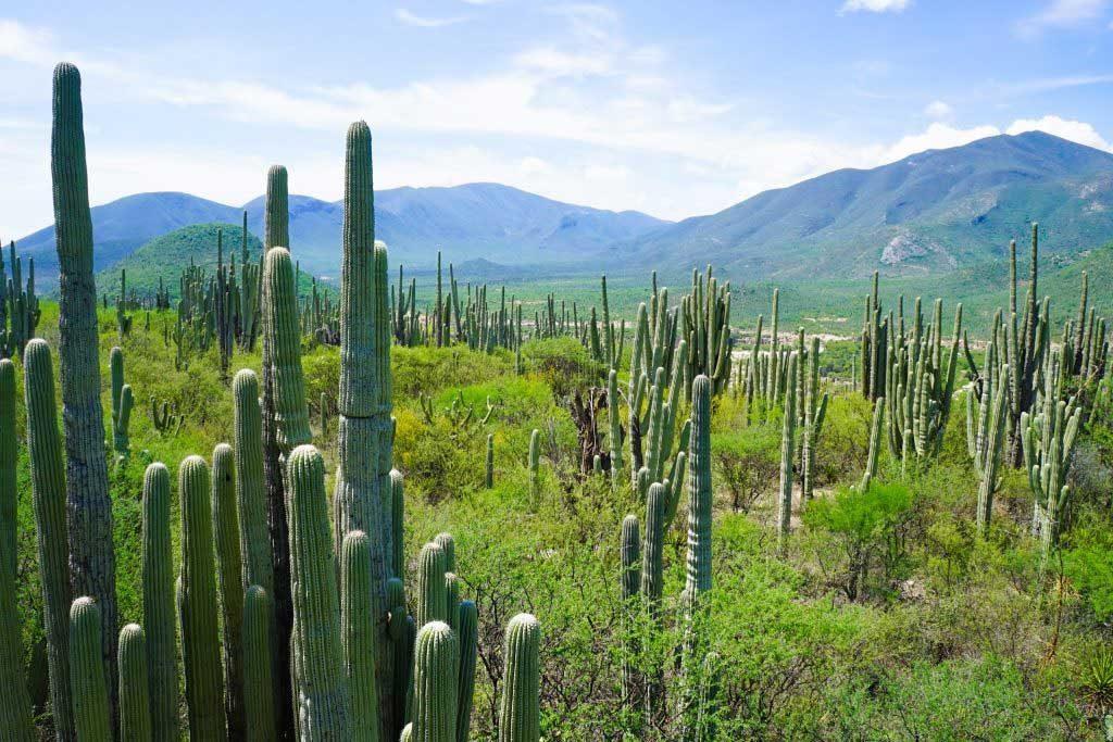Tehuacan paysage