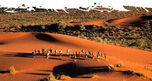 Kalahari-Desert