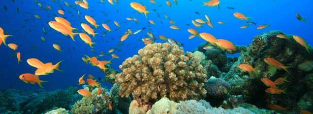 le milieu marin