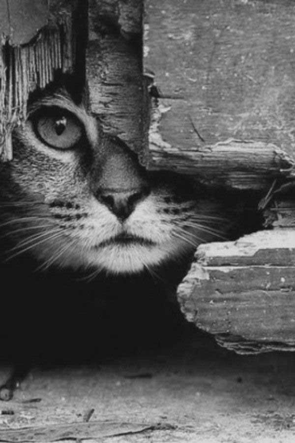 Chat - Photo noir et blanc