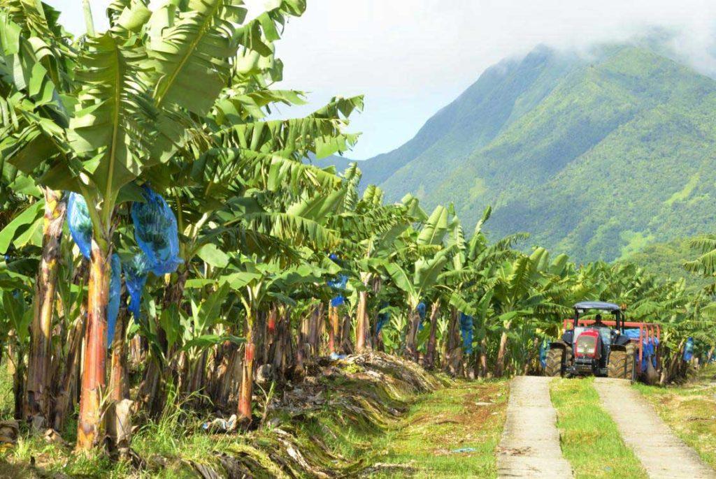 Les hauts de Cambrefort en Guadeloupe